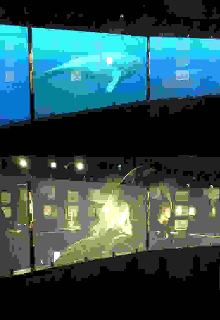 Aquarium San Sebastián Vidrios de privacidad Museos de estilo ecléctico