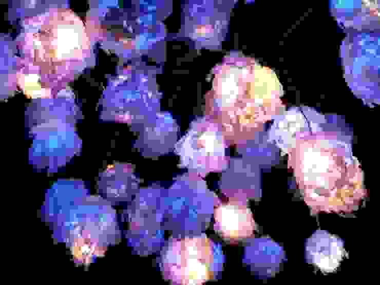 Illuminami per Elita festival, Milano 2013 di SeFa Design by nature Eclettico
