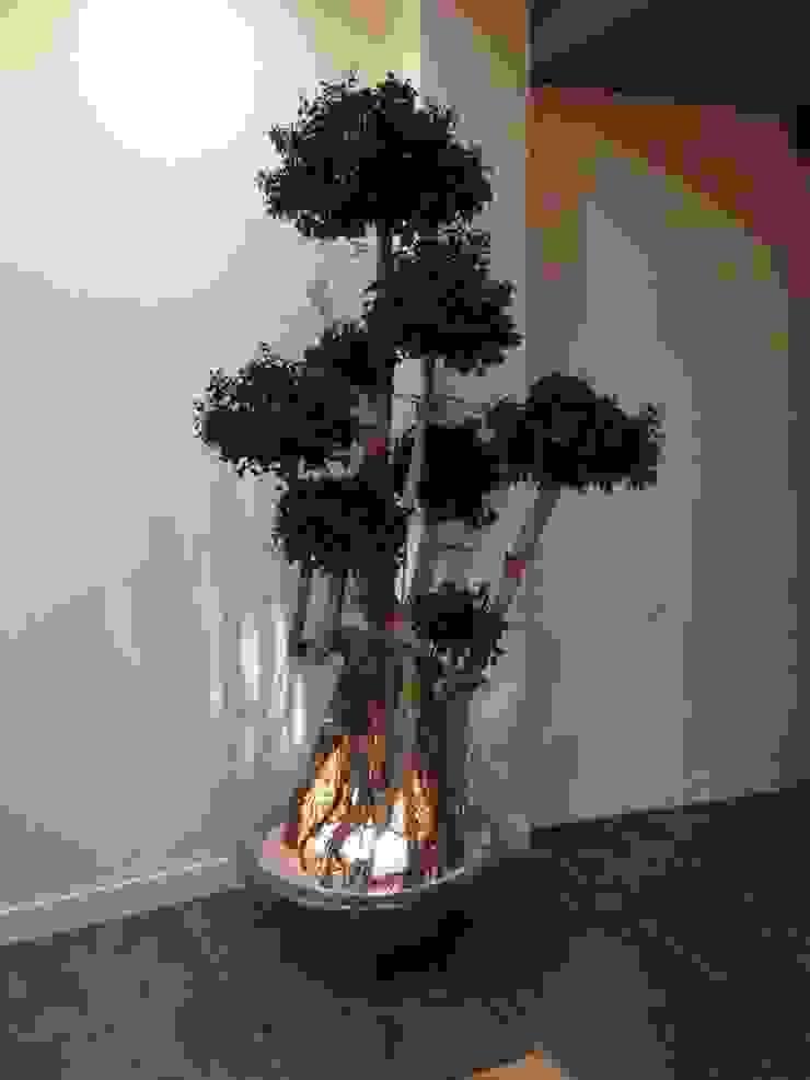 Ficus Ginseng stabilisé par WallUP
