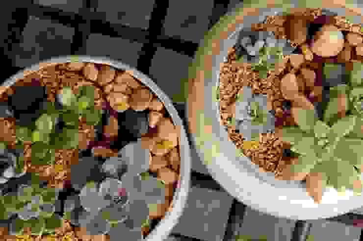 Mini-Jardins por Luiza Soares - Paisagismo Minimalista
