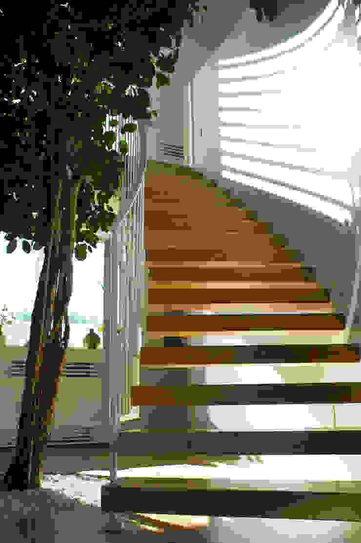 l'albero e la scala Ingresso, Corridoio & Scale in stile mediterraneo di m12 architettura design Mediterraneo