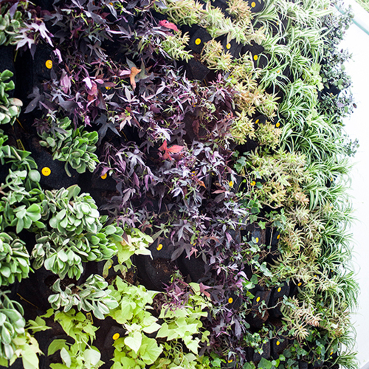 Jardín vertical de CONILLAS - exteriors Mediterráneo