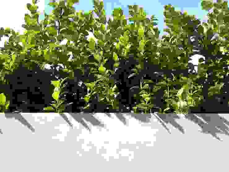 Roof terrace 2 Paul Newman Landscapes Balcones y terrazas