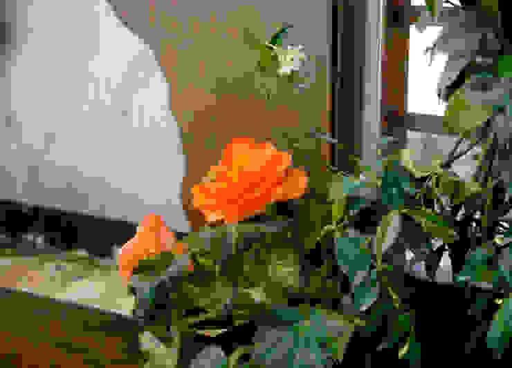 Detalle jardinera - Viveros Peña de Slabon Forja Creativa Moderno