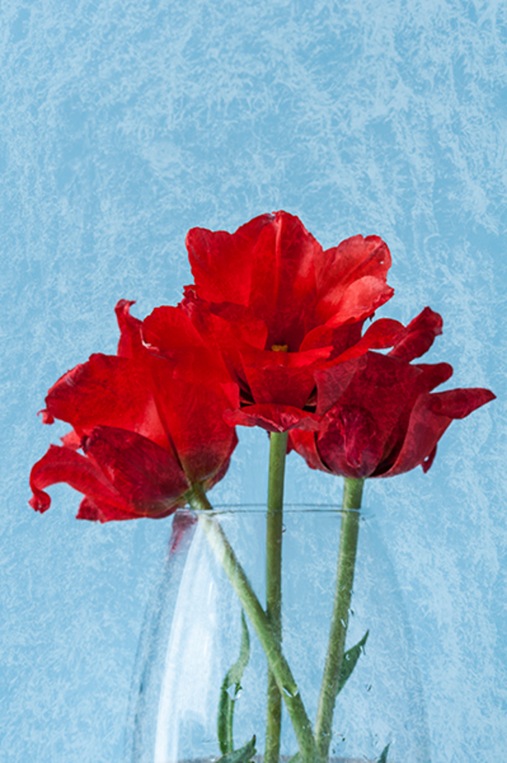 Red Tulips: eclectic  by Steve Purnell, Eclectic