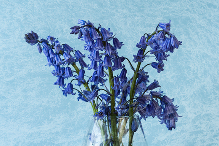 Bluebells: eclectic  by Steve Purnell, Eclectic
