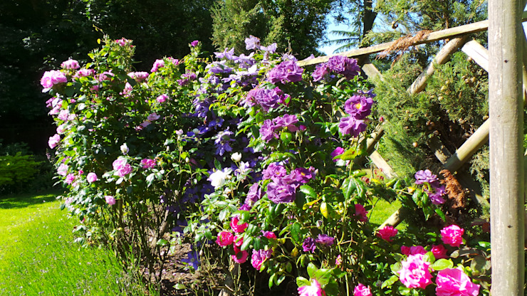 Find a place in your garden for climbers - they will reward you with a wonderful show:  Garden by Perfect Plants Ltd