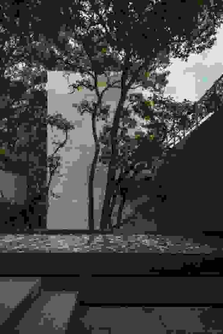 Espejo Agua de Rhyzoma - Arquitectura y Diseño Moderno