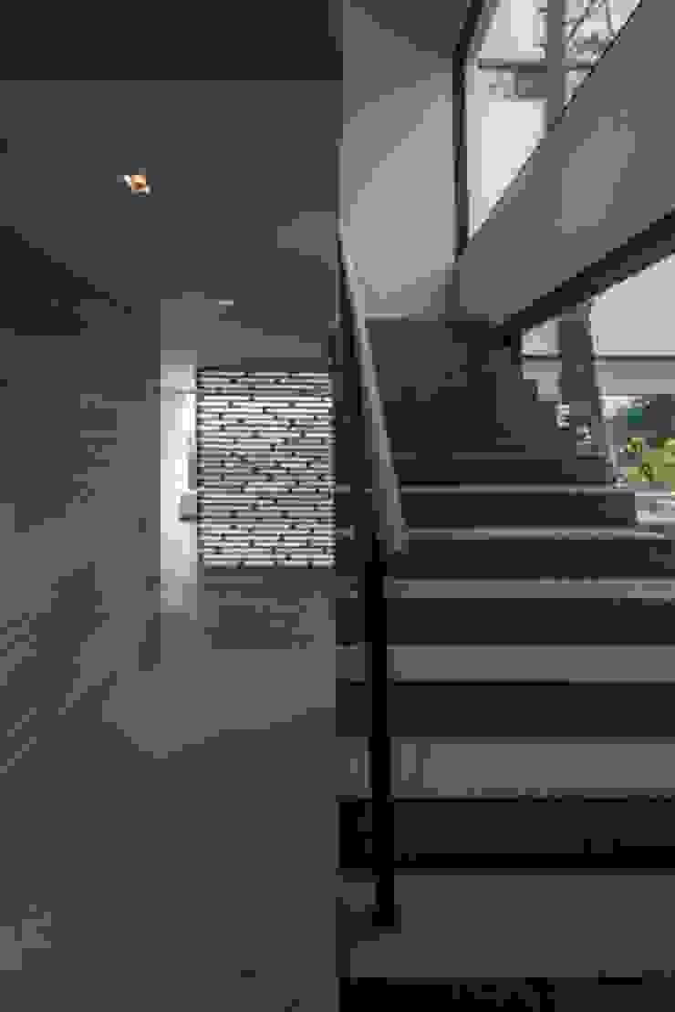 Escalera Principal Hacia Comedor de Rhyzoma - Arquitectura y Diseño Moderno