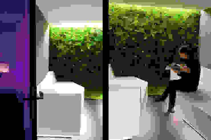 Mur végétale espace d'attente Espaces commerciaux modernes par Galaktik Moderne