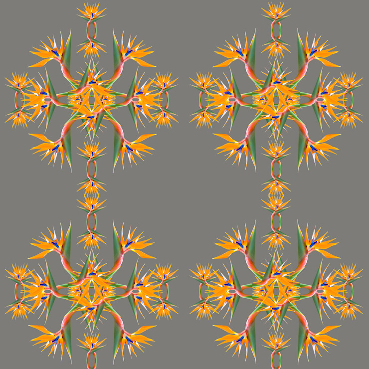 Bird of Paradise Wallpaper di Lomas & Lomas Tropicale