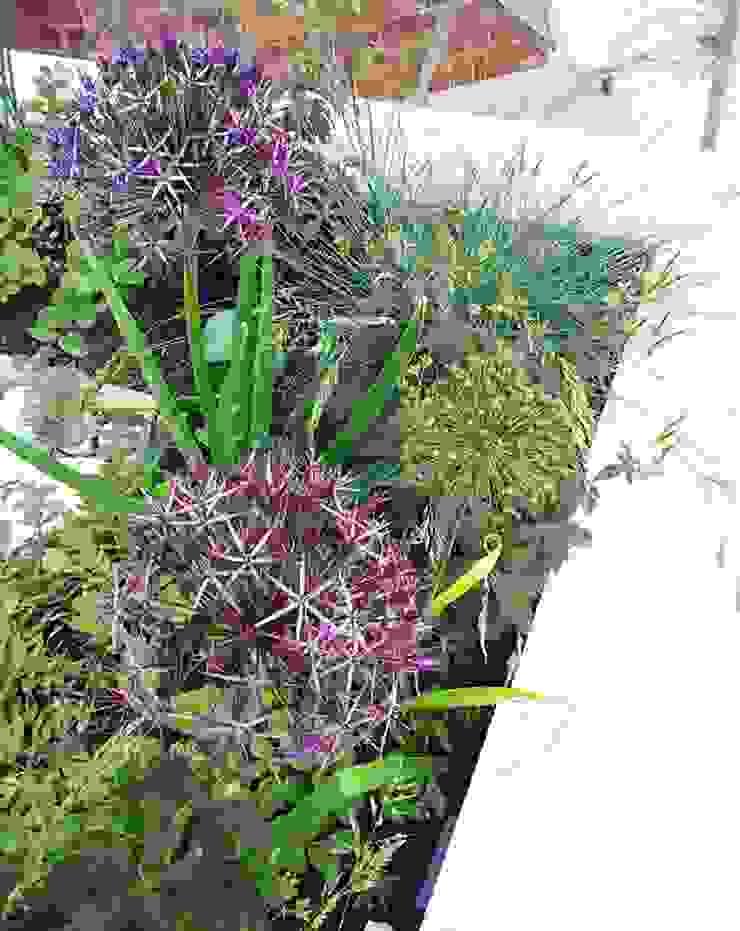 Alliums in raised bed Modern garden by Gardenplan Design Modern
