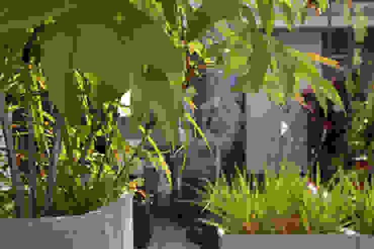 Bepflanzung sonnige Süd- Dachterrasse Berlin Balkon, Veranda & Terrasse von Nelka
