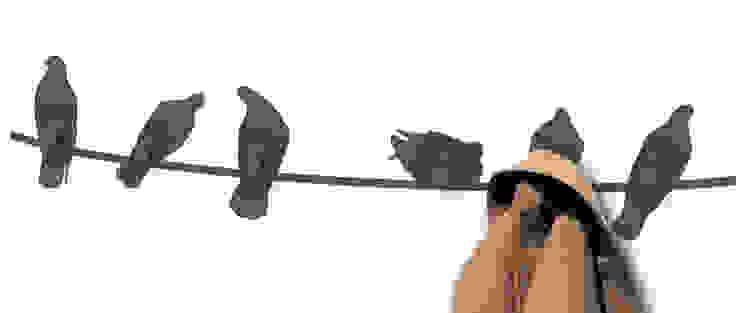 birds on wire di Covo Moderno