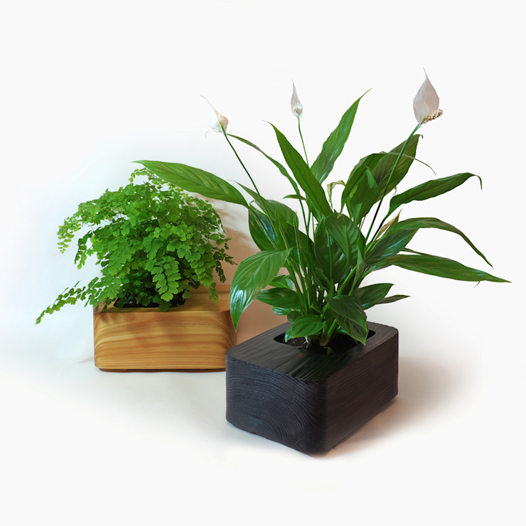 Accessories Tanti Design HouseholdPlants & accessories