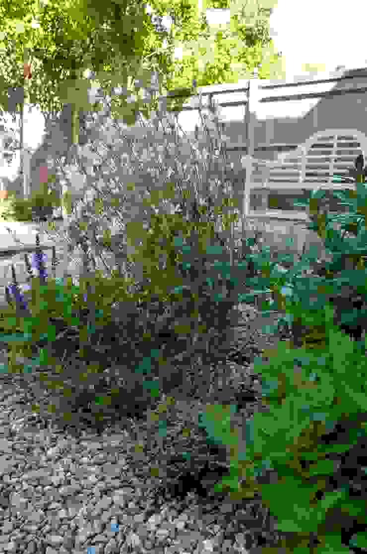 Serene Gravel Garden Cornus Garden Design Сад в стиле модерн