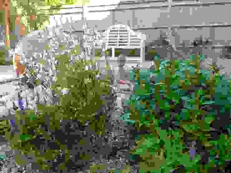 Serene Gravel Garden Cornus Garden Design Taman Modern