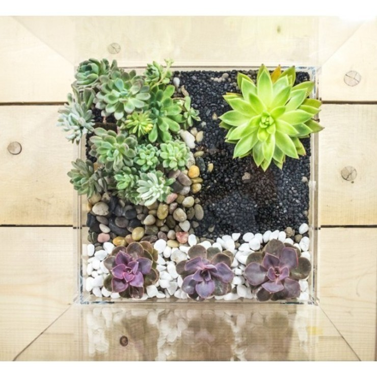 Designtrasparente Interior landscaping