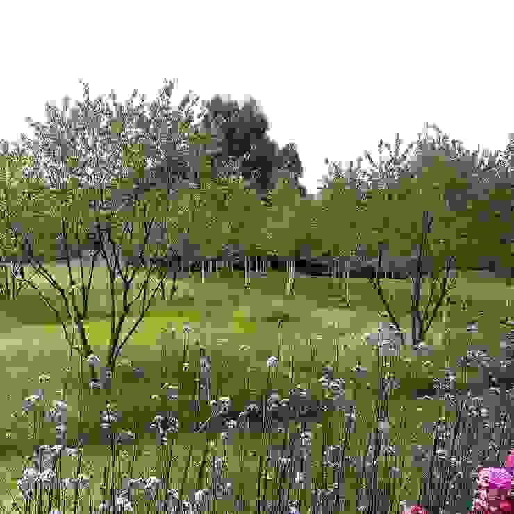Beautiful multistem prunus trees : country  by Joanne Alderson Design, Country