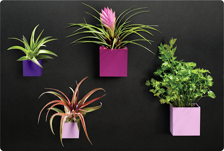 KalaMitica Magnetische Blumentöpfe & Metalltafel von Greenbop Tropisch