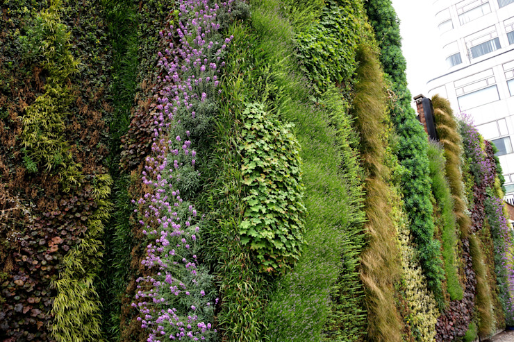 Close up of our living wall at Edgware Road Tube Station por Biotecture