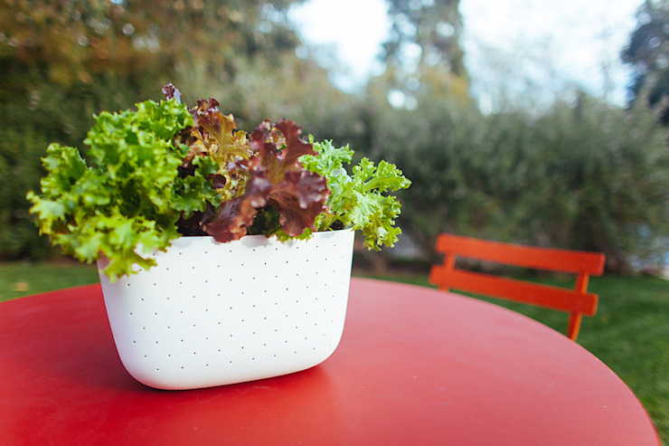 NEW Living Wall Planter von Woolly Pocket