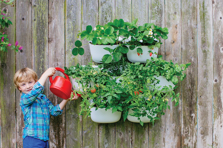 NEW Living Wall Planter por Woolly Pocket