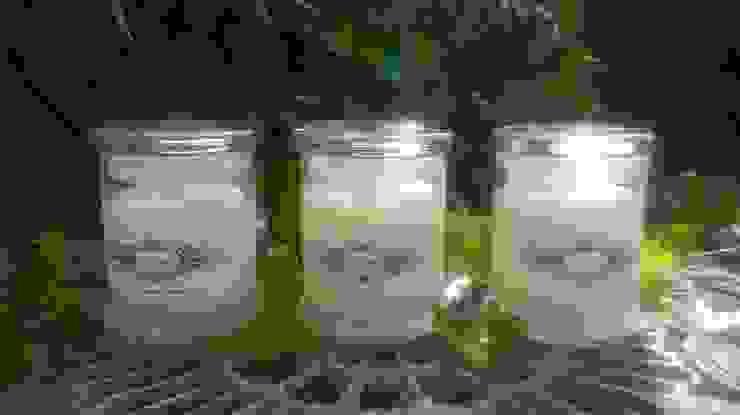 Lemon Basis Manderin The Candle Alchemist DormitoriosIlumninación