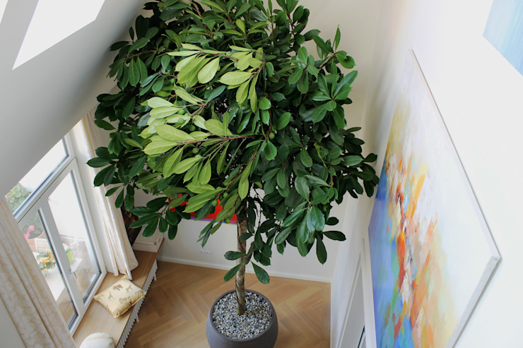 House in Hannover:  Binnenbeplanting door Boom in Huis  / Baum im Haus / Trees in the Home