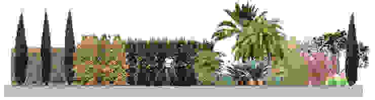 Jardin privado en Buenos Aires, Argentina Jardines de estilo asiático de Paisajismo Digital Asiático