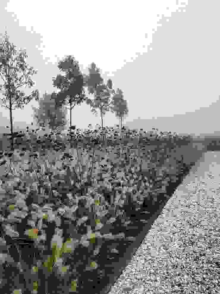 Combinatie van Siergrassen en Verbena Stam Hoveniers TuinPlanten & bloemen