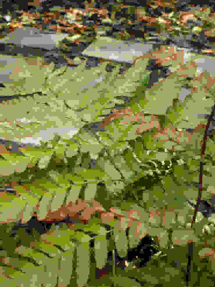 Fern Rustic style garden by Fenton Roberts Garden Design Rustic