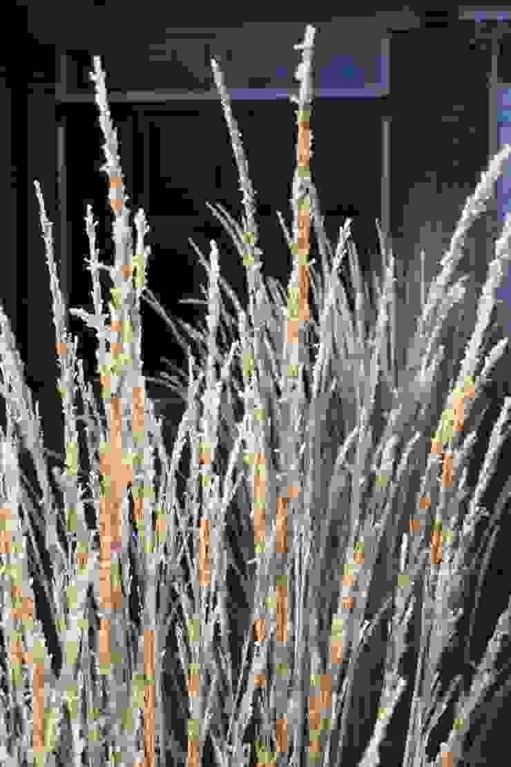 Grasses: minimalist  by Fenton Roberts Garden Design, Minimalist