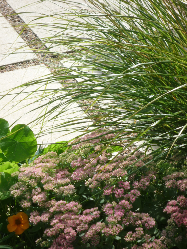 concrete paving stones Modern garden by Fenton Roberts Garden Design Modern
