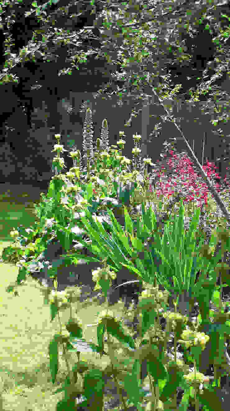 flower border Fenton Roberts Garden Design 花園植物與花