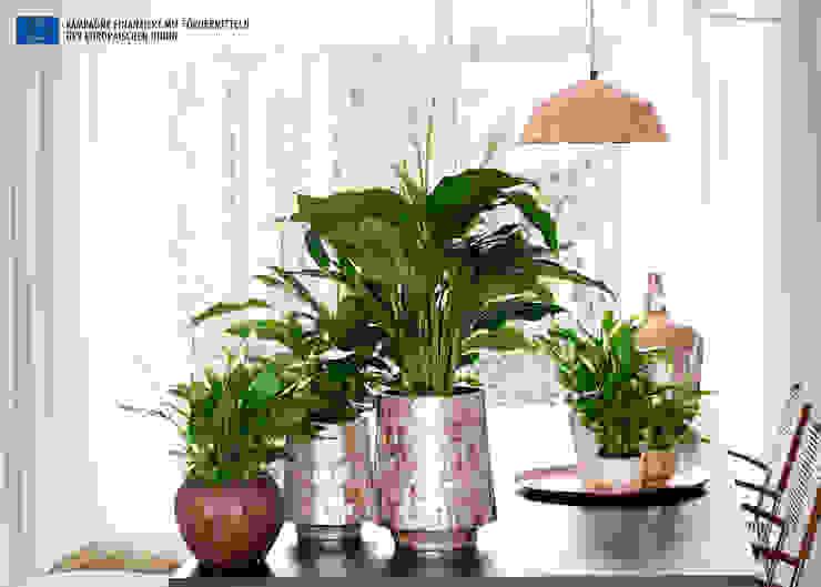 Der Einblatt – Zimmerpflanze des Monats Juni: modern  von Pflanzenfreude.de,Modern