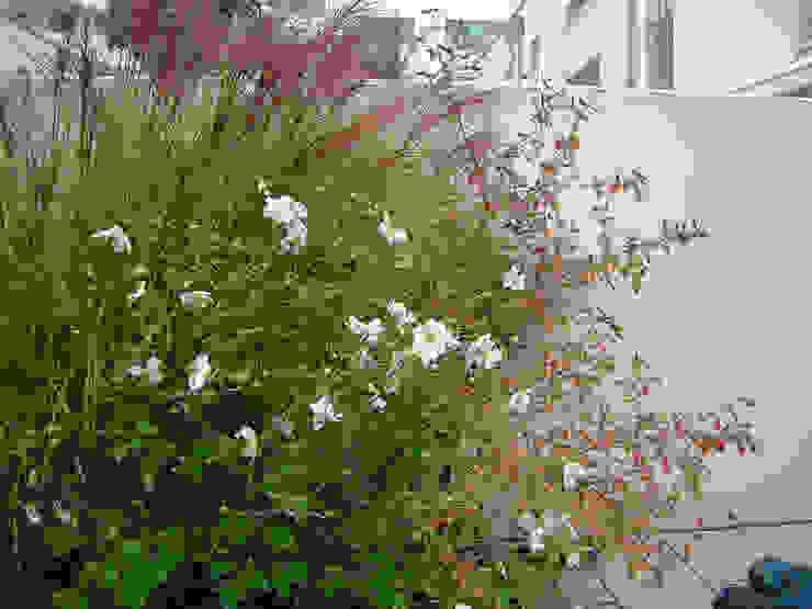 by Blumen & Gärten Сучасний