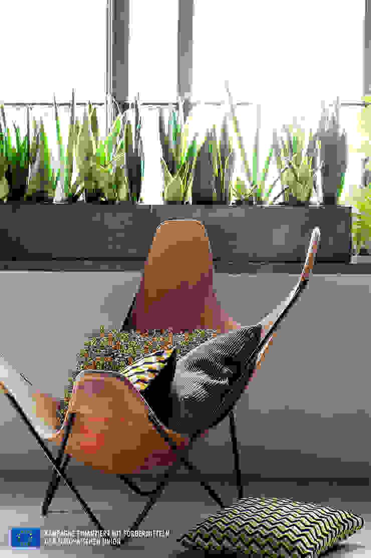 Der Bogenhanf – Zimmerpflanze des Monats August von Pflanzenfreude.de Rustikal