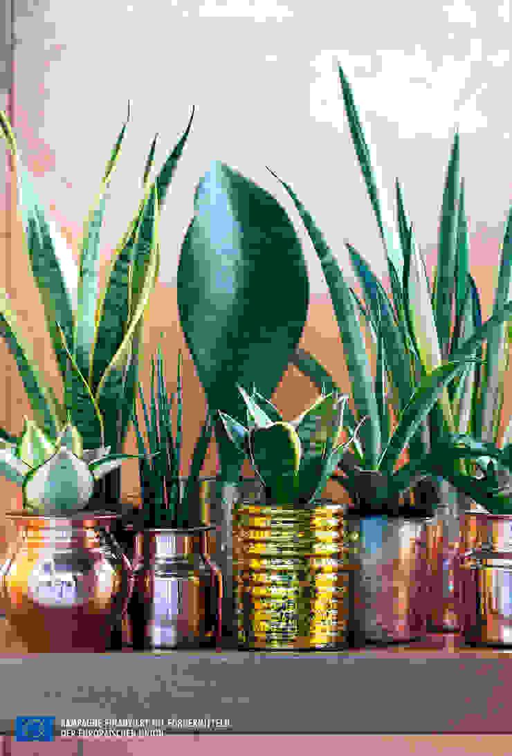 Der Bogenhanf – Zimmerpflanze des Monats August: modern  von Pflanzenfreude.de,Modern