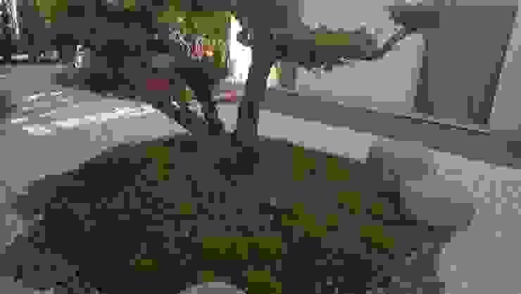 Asyatik Bahçe giardini di lucrezia Asyatik