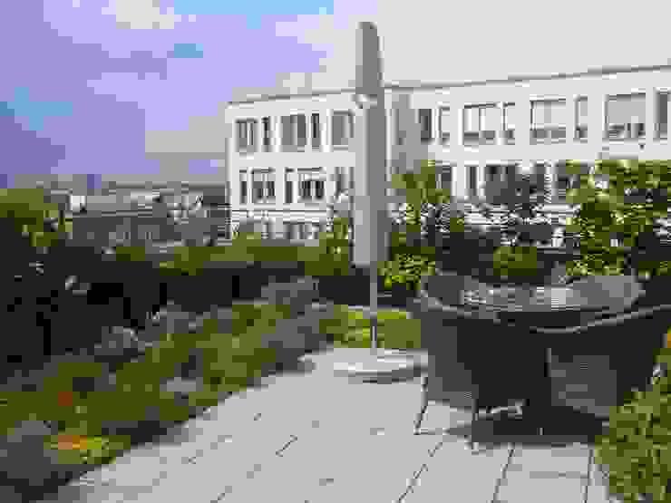 Blumen & Gärten Balcones y terrazas modernos: Ideas, imágenes y decoración