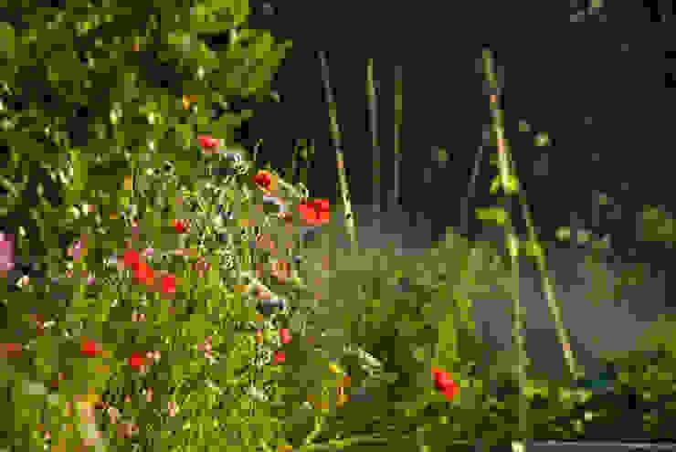 poppies in veg garden Country style garden by Katherine Roper Landscape & Garden Design Country