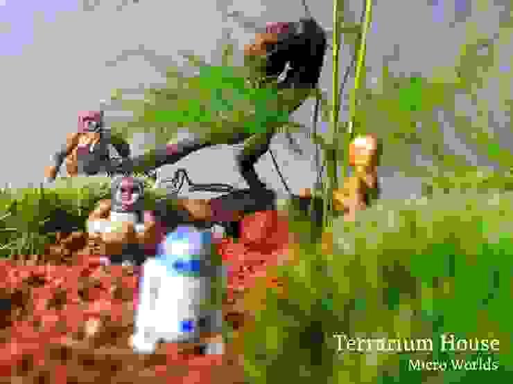 Terrarium House – Terrarium 'Star Wars- Ewok Village': modern tarz , Modern