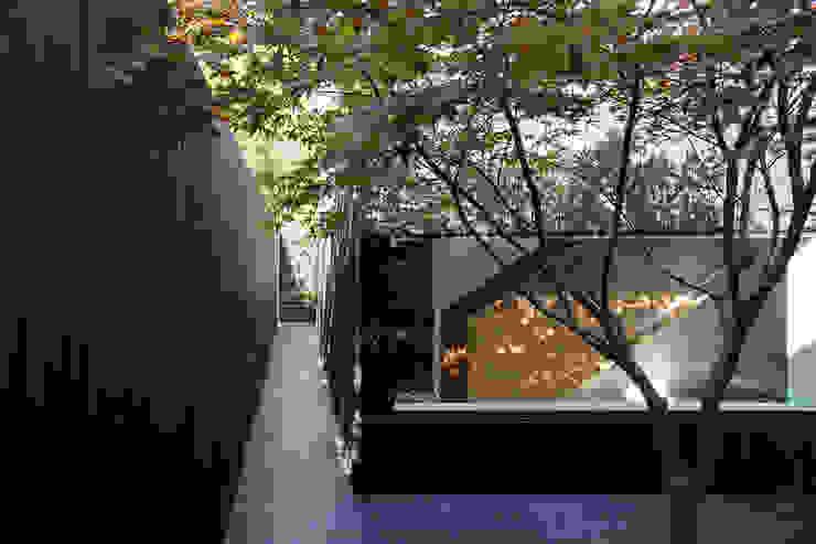 Garden Modern garden by Ed Reeve Modern
