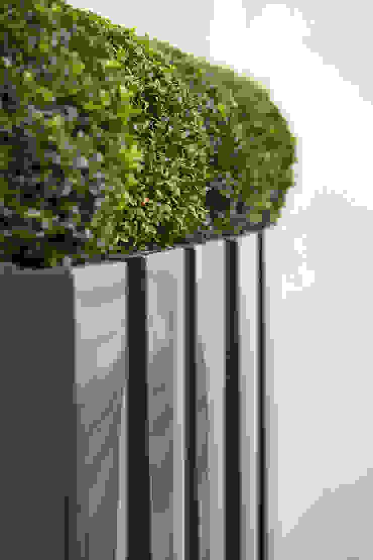 Buxus balls in powder-coated metal planters: modern  by FORK Garden Design, Modern