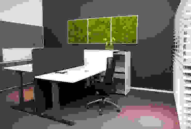 Einrichtung bei Febrü mit Kugelmoosbildern: modern  von FlowerArt GmbH | styleGREEN,Modern Naturfaser Beige