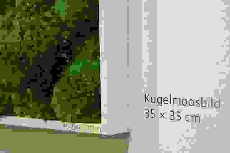 Detailansicht Kugelmoos: modern  von FlowerArt GmbH | styleGREEN,Modern Naturfaser Beige