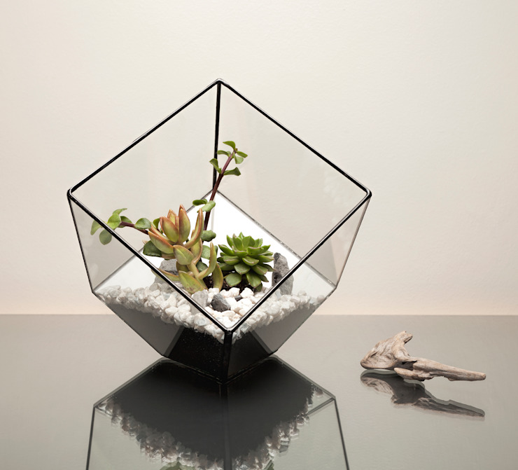 Terrarium Installations by The Urban Botanist Modern
