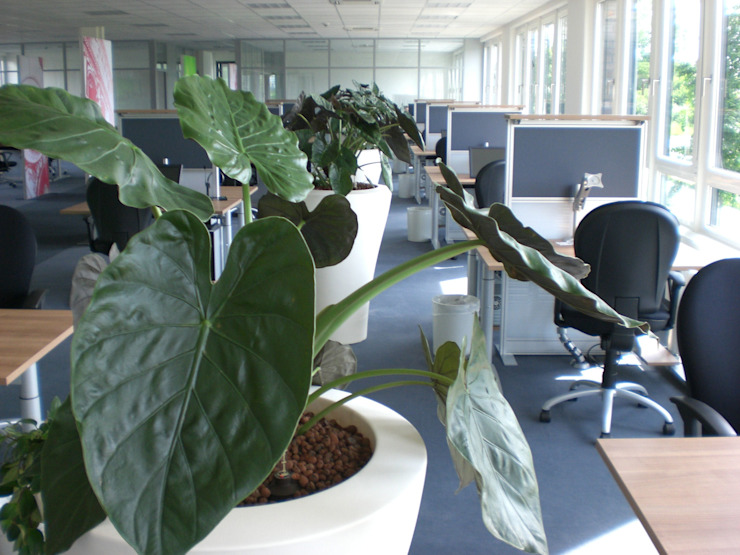 by BAUMHAUS GmbH Raumbegrünung Pflanzenpflege Сучасний