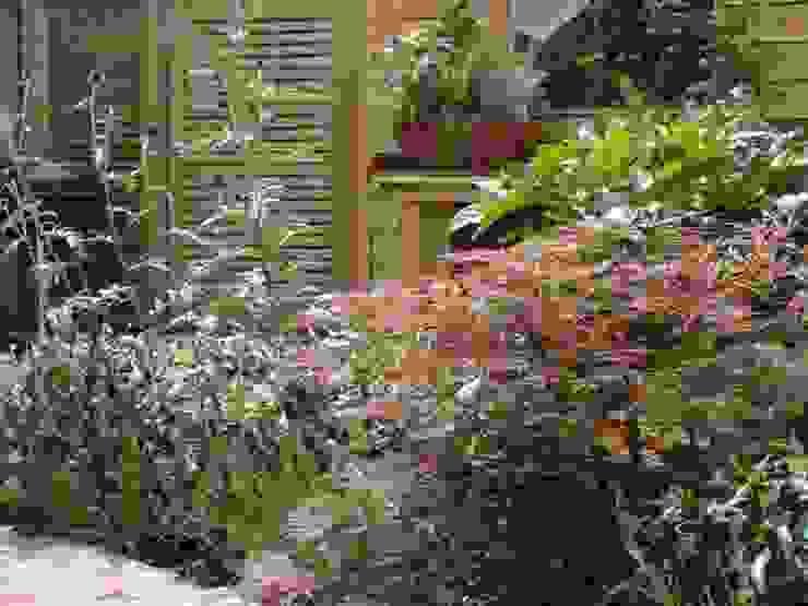 The plants by Anne Macfie Garden Design